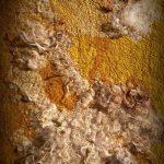 Märchen vom goldgelben Wandfilz